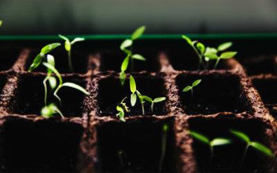 Entrepreneurship - Grow and Scale